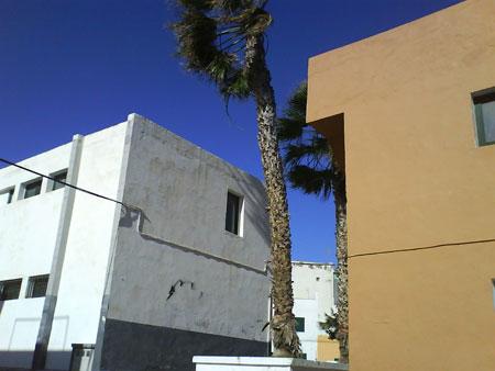 Palme bei Sturm in Punta Brava