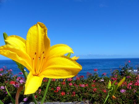 Blume am Meer