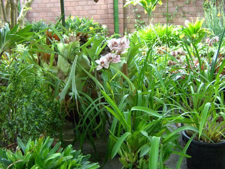 Orchideen im Botanischen Garten von Puerto de La Cruz