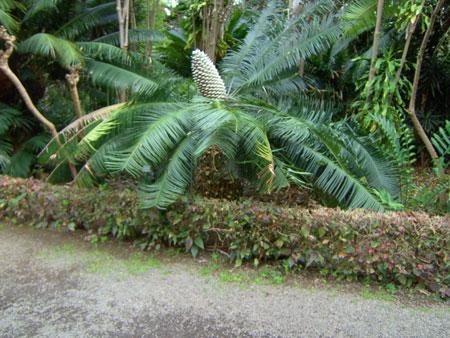 Eine der Palmen im Botanischen Garten