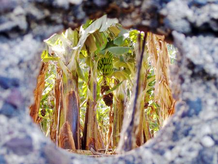 Guckloch Banenenplantage