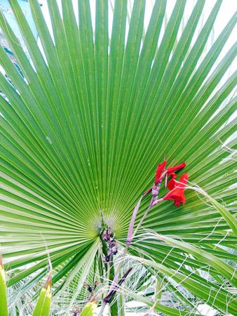 Palme mit Blume