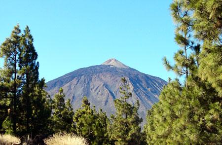 Kanarische Kiefer und Teide