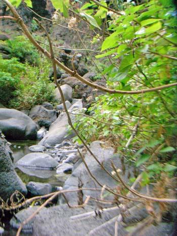 Bäume, Steine, Wasser in der Mascaschlucht