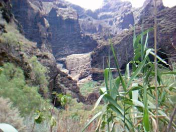 Vegetation am Rande unseres Wanderweges in der Masca Schlucht