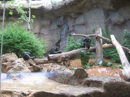Gorilla Gehege