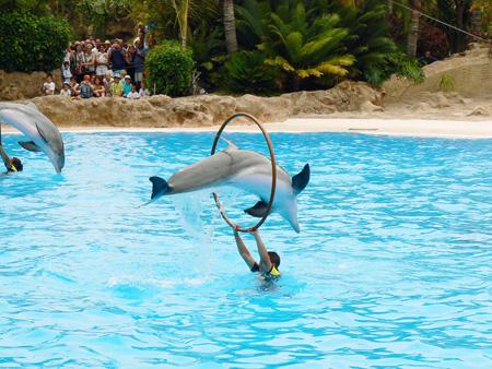 Delfine springen durch den Reifen, Loroparque Teneriffa