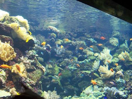 Blick in eines der Aquarien im Loro Park