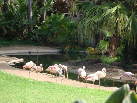 Flamingos aus Chile