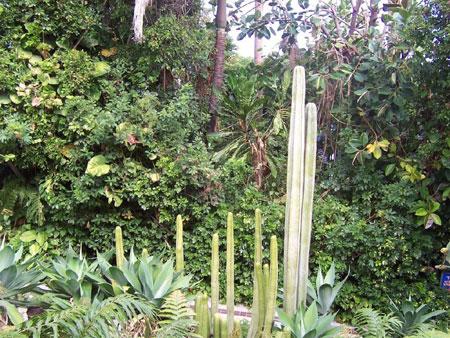 Kakteen Garten