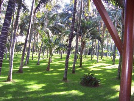 Der Palmenhein im Loro Parque