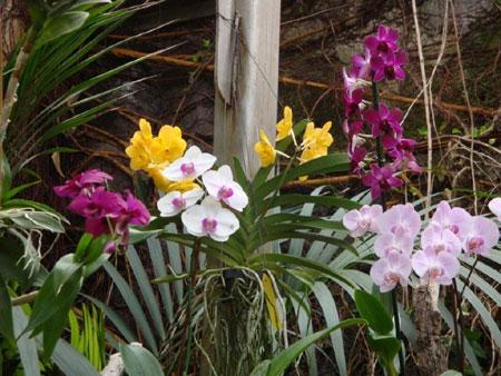 Orchideen Garten