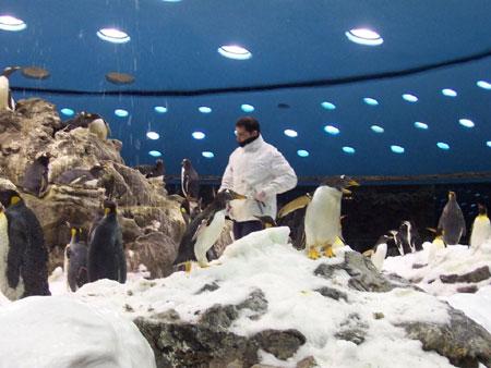 Die Tierpfleger im antarktischen Klima müssen sich warm anziehen