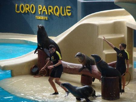 Seelöwen Show und Fütterung