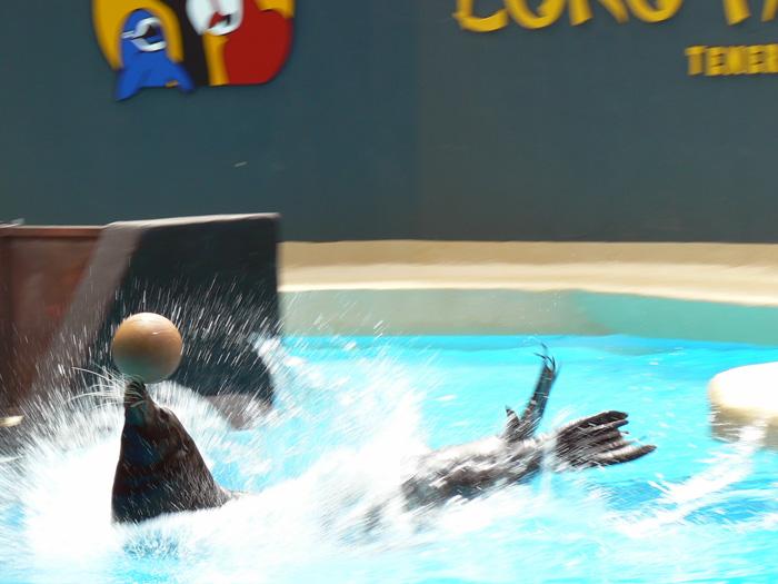 Seelöwe - Wassersport... auf Teneriffa