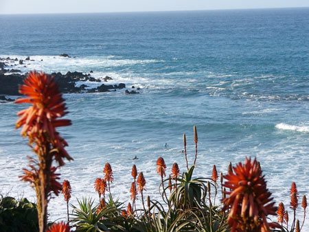 Blüten und Meer