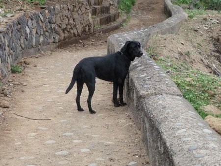 Selbst der Hund findet die Aussicht toll