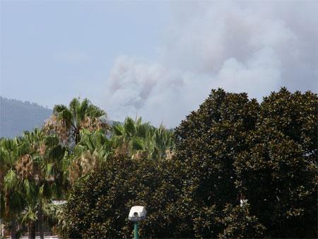 Waldbrand auf Teneriffa
