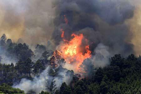 Hell lodert das Feuer im Wald von Masca