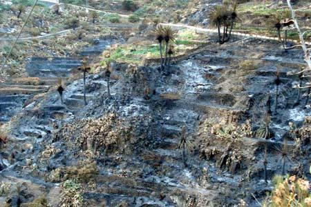 Masca - trauriges Bild nach dem Feuer - vieles ist verbrannt