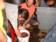 Zugabe der Weinsäure zum Most
