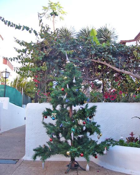 weihnachtsbaum teneriffa