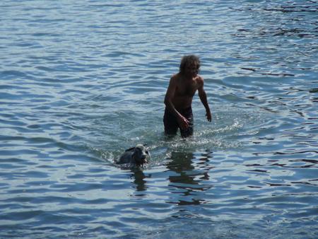 Ziege und Mann im Hafen von Puerto de la Cruz