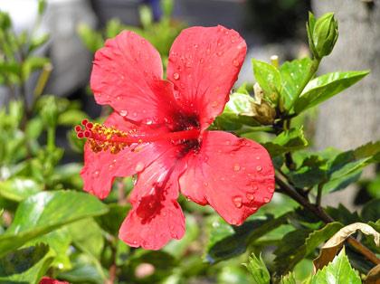 Blumen und Pflanzen - Teneriffa
