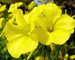 Pflanzenwelt auf Teneriffa