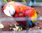 Papageien im Loro Parque in Puerto de la Cruz