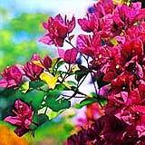 Blumen auf Madeira