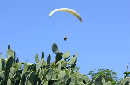 Paragliding Feigenkaktus