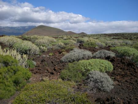 Landschaft bei Güimar