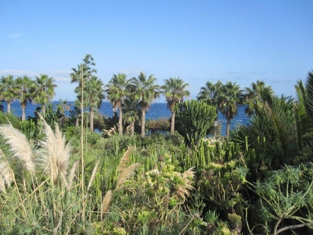 Botanik Playa Jardin