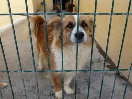 Hunde von Teneriffa mitnehmen