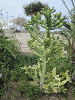 Interresante Pflanzen