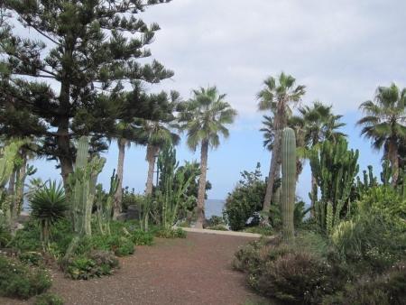Palmen, Nadelbäume, Kakteen