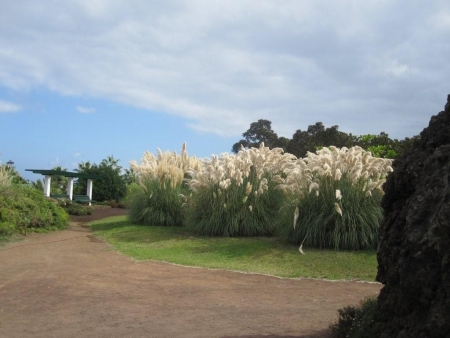 Schilfgras Playa Jardin