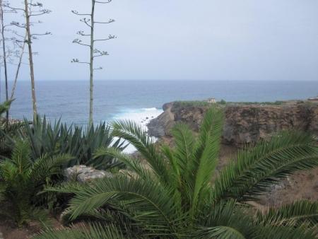 Teneriffa Vegetation Felsen