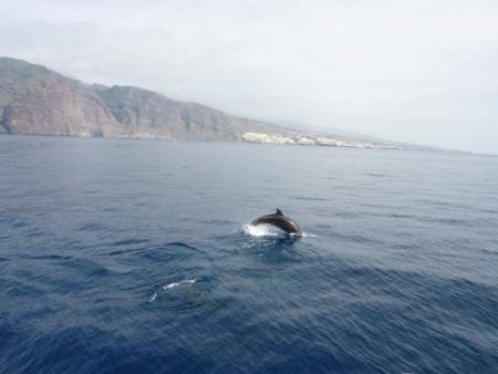 Trekking Delphin