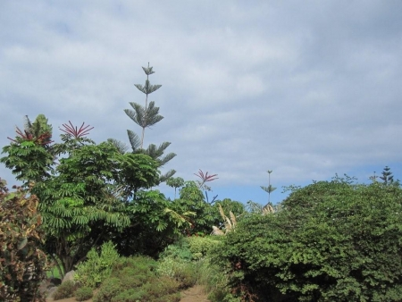 Vegetation Playa Jardin