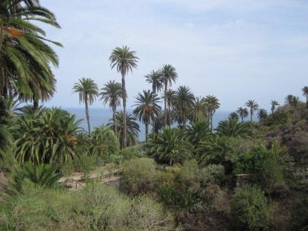 Vegetation Teneriffa